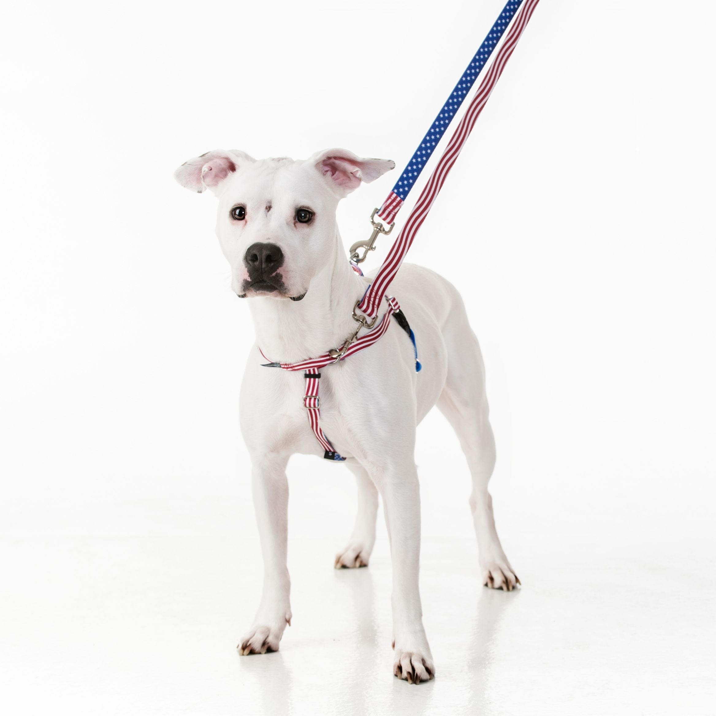 Star Spangled Freedom No Pull Dog Harness Earthstyle 2 Hounds Design Dog Harness Your Dog Dogs