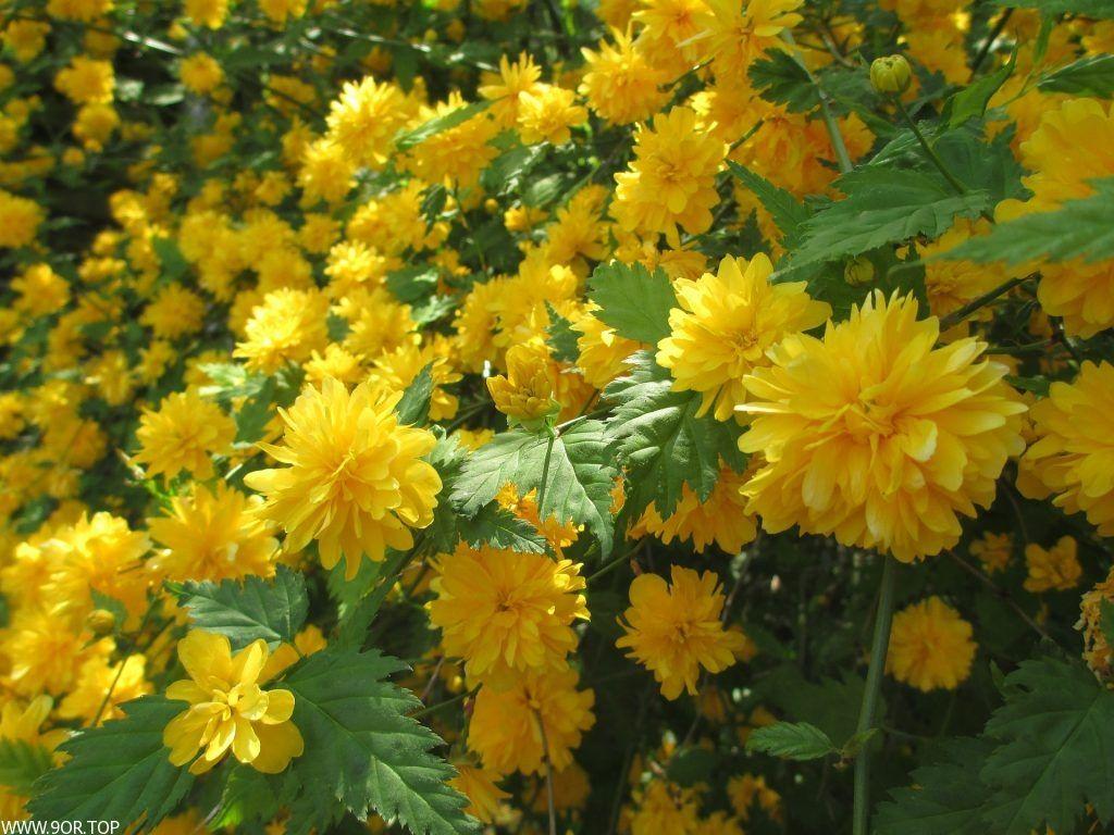 خلفيات ورد اصفر احلى صور ورود صفراء 2018 Beautiful Flowers Plants Flowers