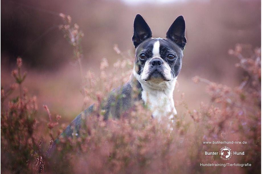 Https Www Bunterhund Nrw De Blog Tiere Hunde Tierfotografie