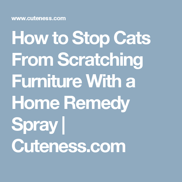 How To Stop Cats From Scratching Furniture With A Home Remedy Spray Cuteness