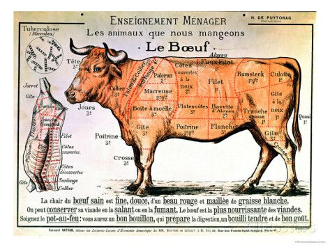 Beef Diagram Depicting the Different Cuts of Meat Giclee Print