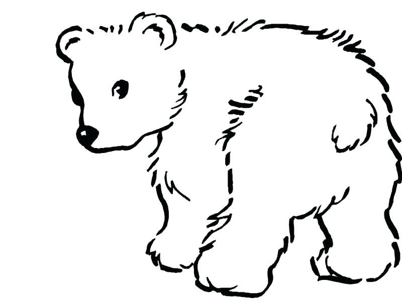 Polar Bear Coloring Pages Printable Sleeping Bear Coloring Page Voyancedirecte 800 X 600 Pixels Polar Bear Coloring Page Bear Coloring Pages Polar Bear Tattoo