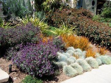 Pin On Gardening Drought Tolerant Plants