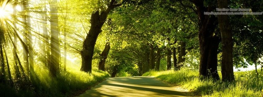 Green Nature Timeline Cover Banner Landscape Photography Trees Nature Pictures Nature Scenes