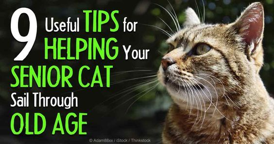 """Cats are officially """"seniors"""" by the time they reach 10 years of age -- here's what to expect as your kitty ages. http://healthypets.mercola.com/sites/healthypets/archive/2014/09/22/senior-cat-care.aspx"""