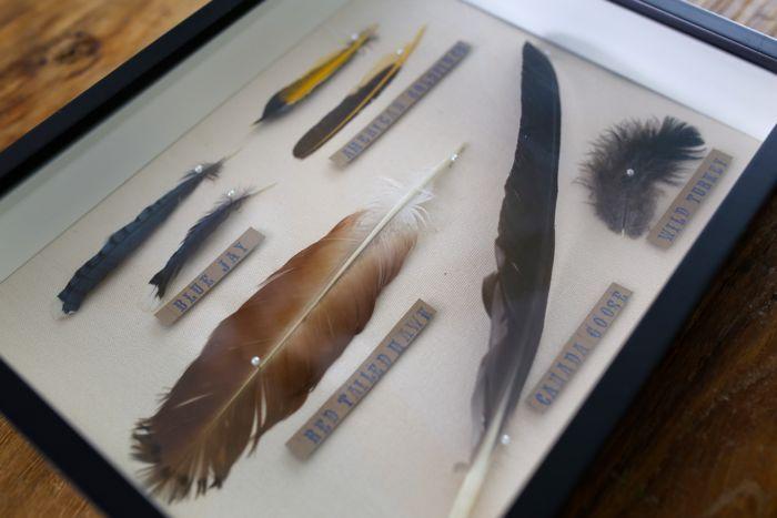 9eec77ed0277d diy:: Feather Collection Display - bee + daddoobee + daddoo   House ...