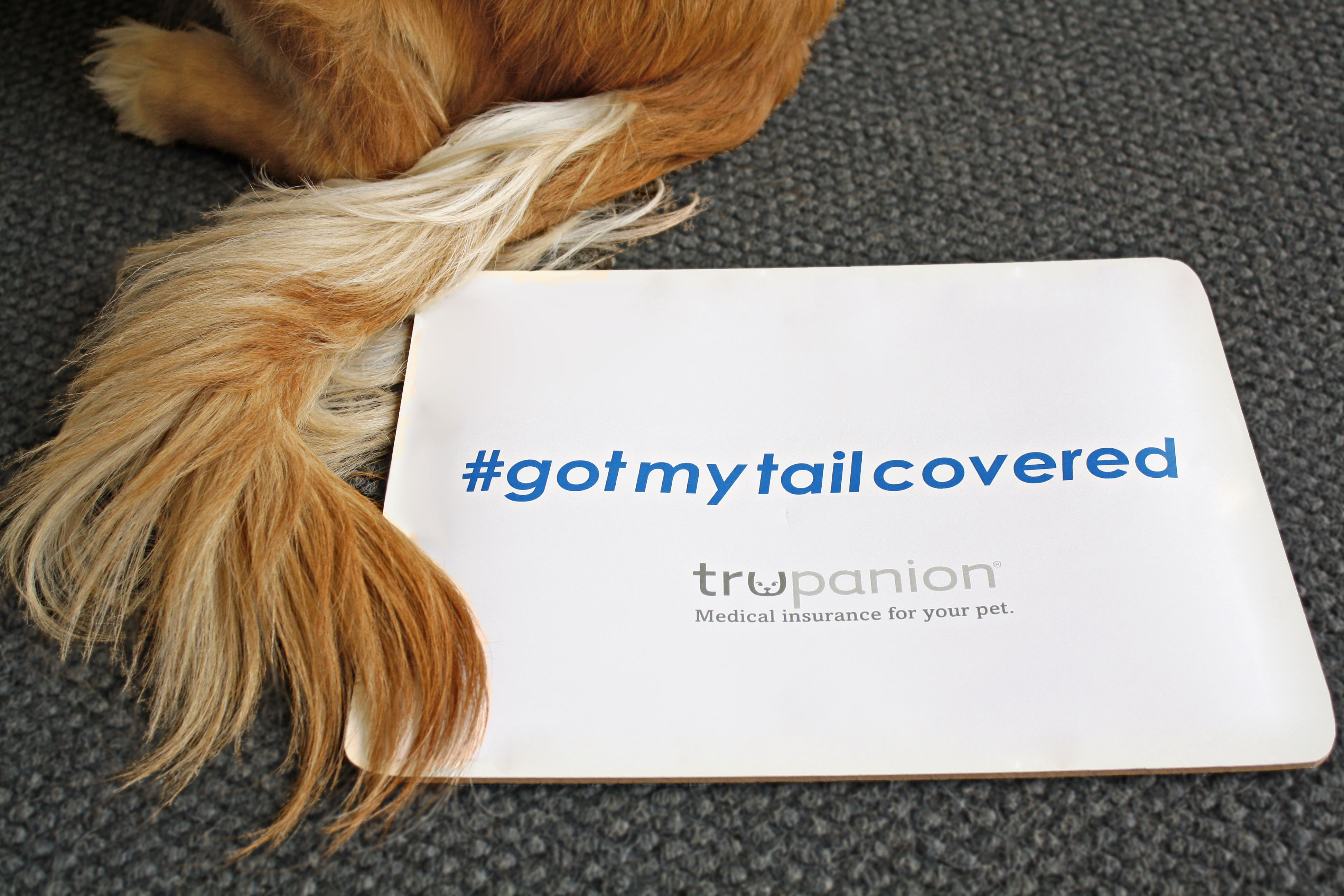 Baileys got her tail covered by trupanion trupanion