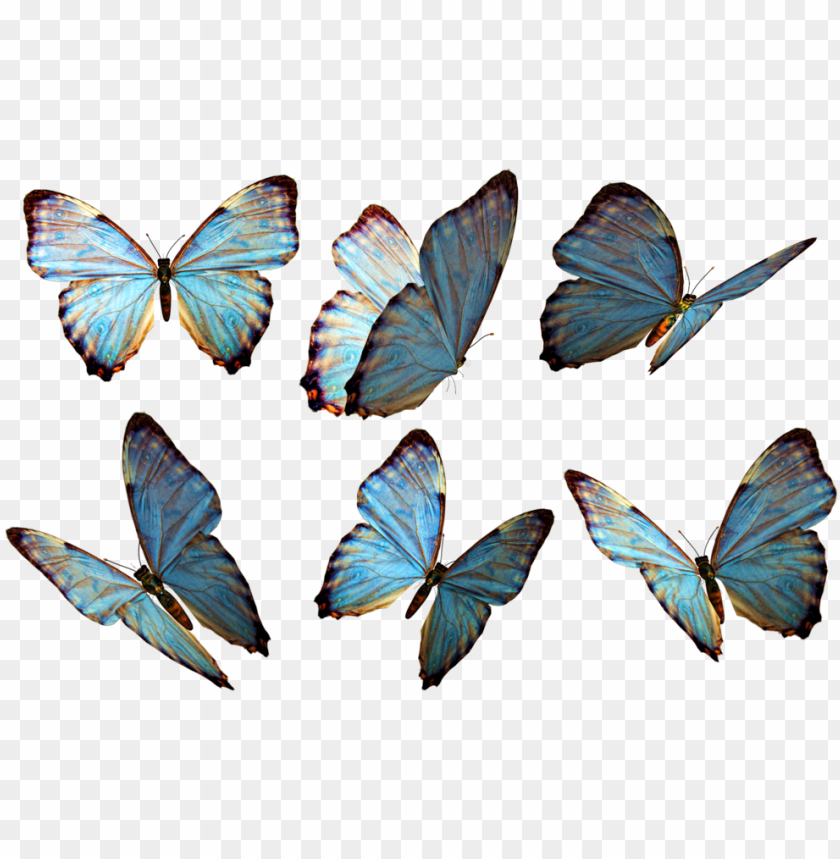 Hotoshop Clipart Beautiful Butterfly Flying Butterfly Png Image With Transparent Background Png Free Png Images Butterfly Background Butterfly Illustration Beautiful Butterflies
