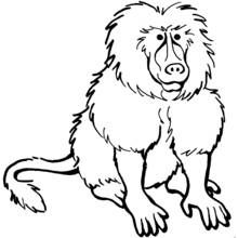 Coloring Pages Baboon Printable Coloring Pages Animal