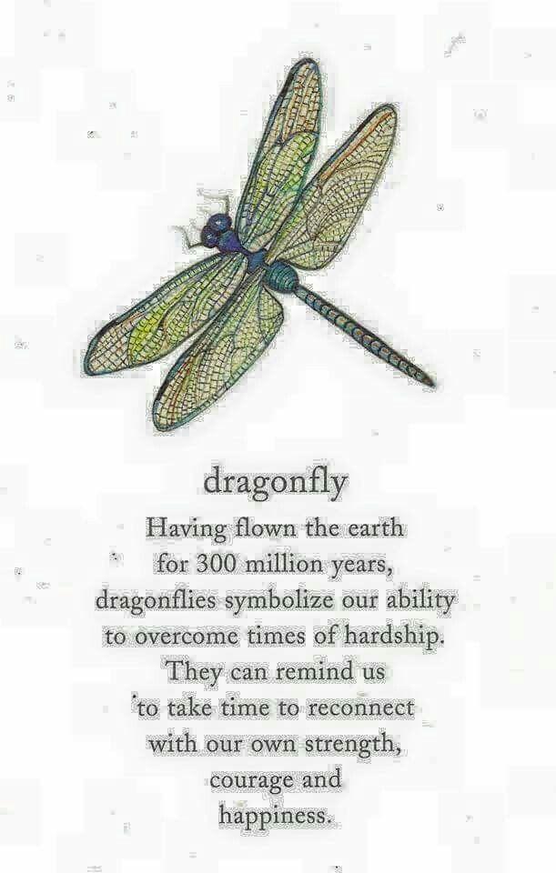Pin By Nancy Jay Remenick On Dragonflies Pinterest Tattoos
