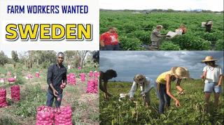 Apply For Sweden Farm Workers Seasonal Jobs Jobs In Sweden Sweden