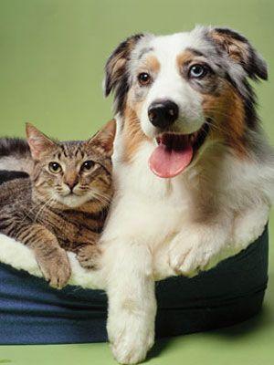 Como el perro y el gato...