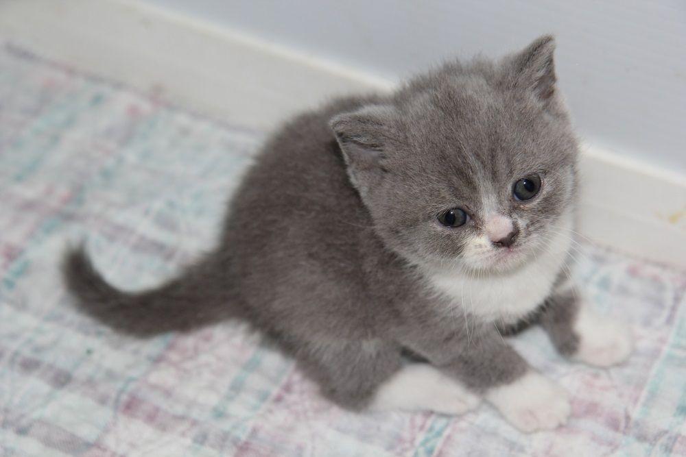 Anastasia Cattery Fur Babies Kittens