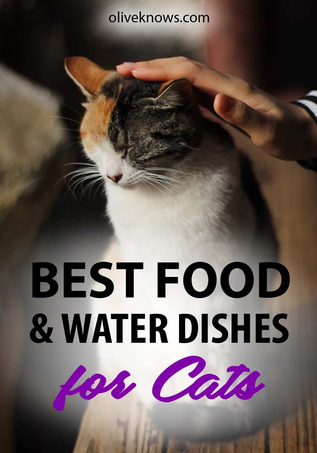 Best Food And Water Dishes For Cats With Images Cat Care Best Cat Food Dry Cat Food