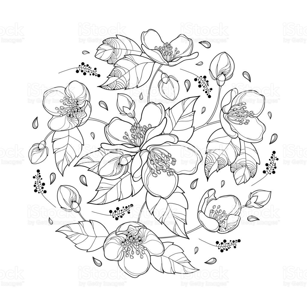 Vector Round Bouquet With Outline Jasmine Flower Bunch Bud And