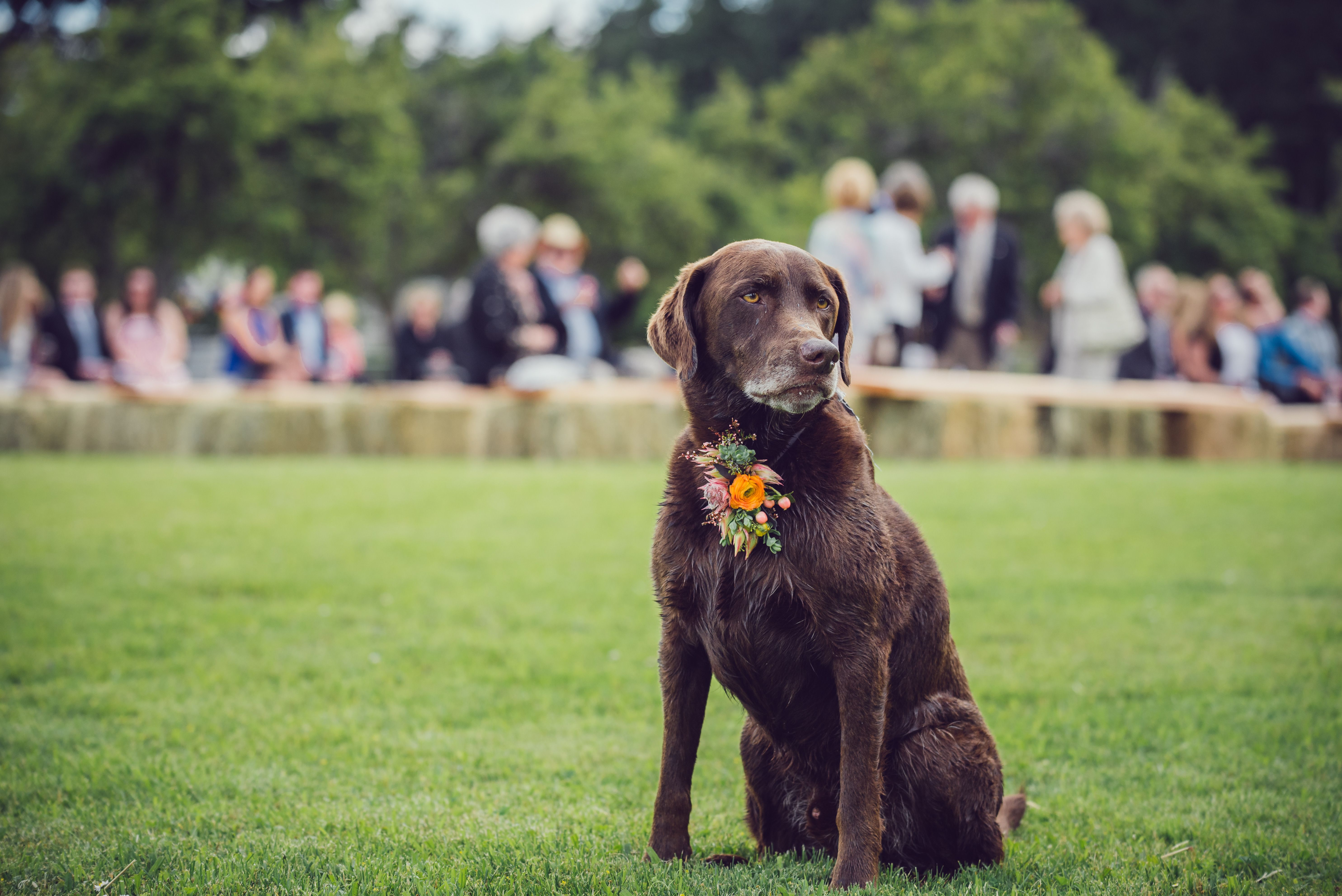 Wedding Tips Tricks Pets At Weddings Dogs At Weddings In 2020 Wedding Pets Dog Wedding Best Part Of Me