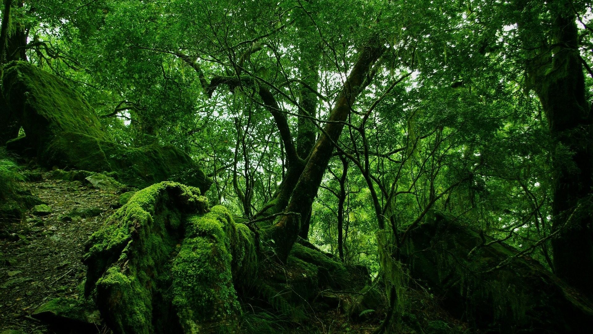 Green Forest Vegetation Wallpaper 1920x1080 Need Iphone 6s Plus Wallpaper Background For Iphone6splu Forest Wallpaper Jungle Wallpaper Nature Wallpaper