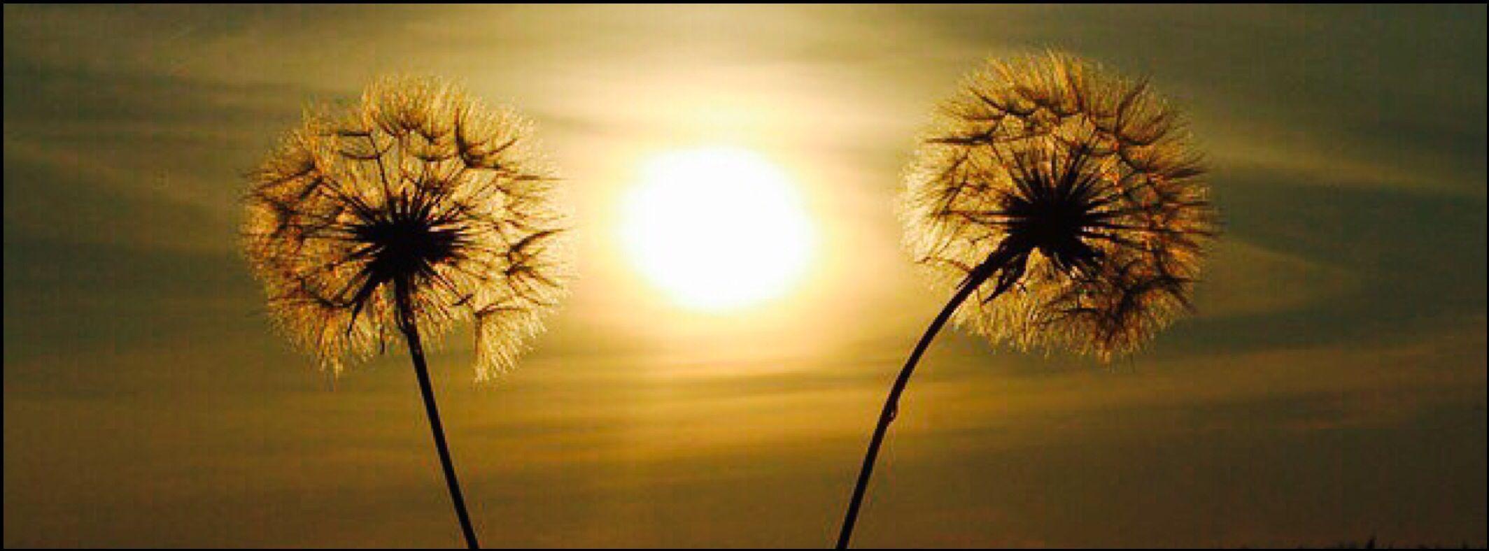 Dandelion on a sunset facebook cover Facebook cover
