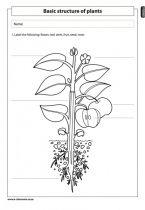 structure of plants natural science worksheet grade 4 life and living pinterest worksheets. Black Bedroom Furniture Sets. Home Design Ideas