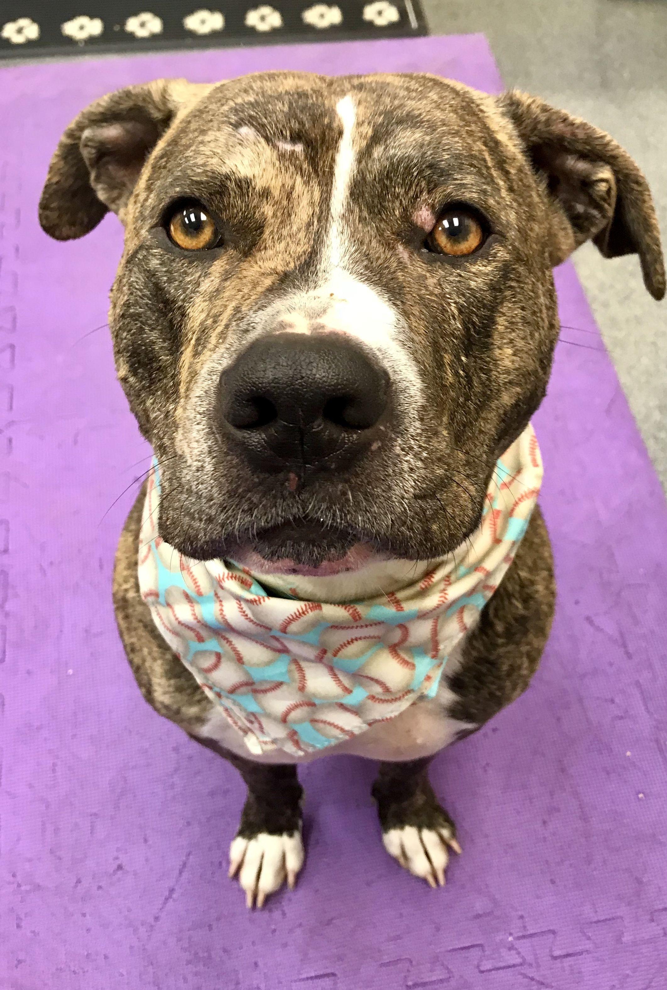 Adopt Wyatt on Beautiful dogs, Dog love, Pet adoption