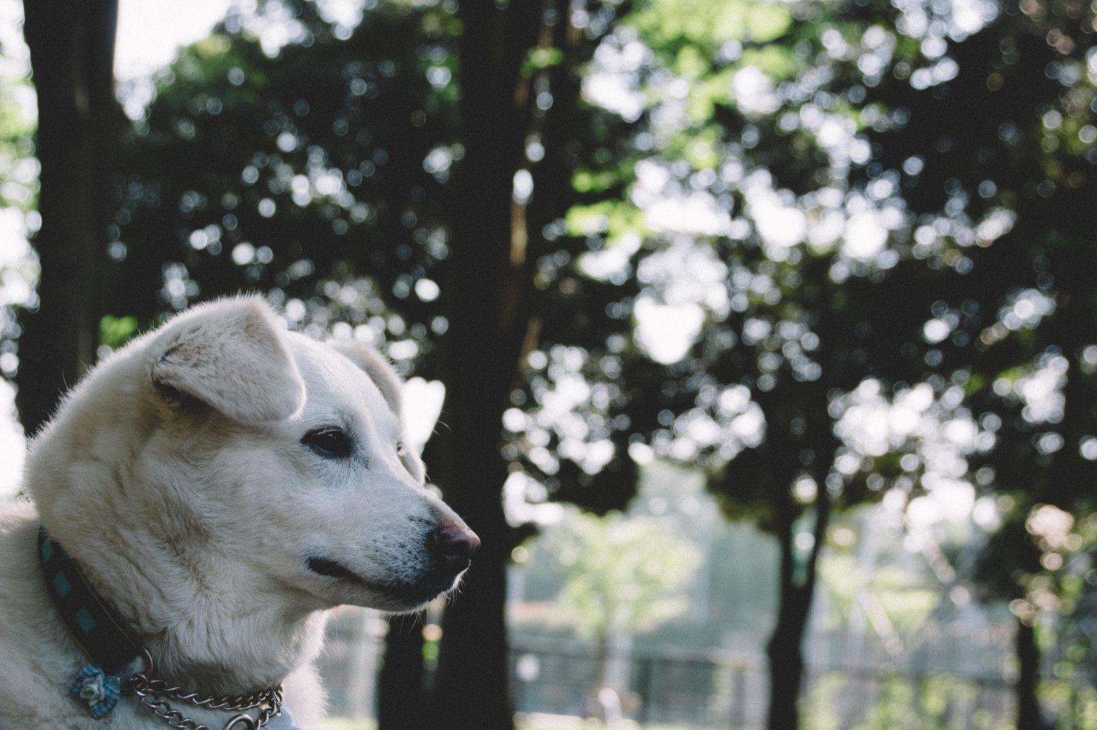 飼い主がなかなか戻ってこないワン飼い主がなかなか戻ってこないワン のフリー写真素材 Dogs Animals Husky