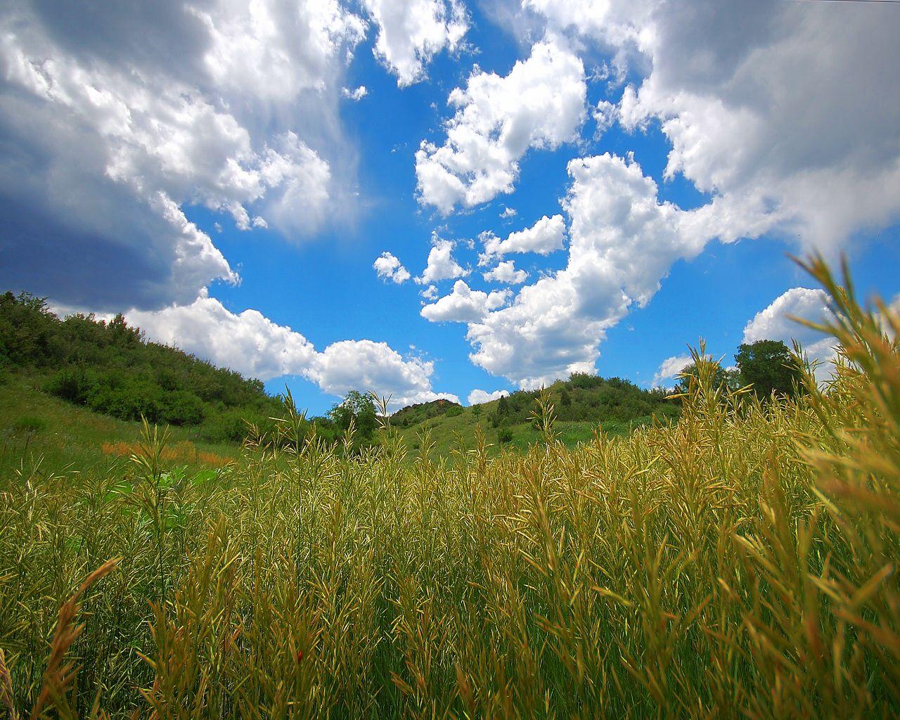 http://fc06.deviantart.net/fs48/f/2009/199/f/7/Shag_Rug_Meadow_by_greenunderground.jpg