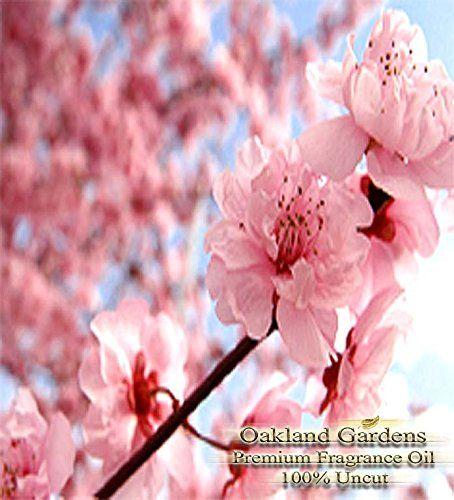 Japanese Cherry Blossom Fragrance Oil 100 Pure Premium Grade Oil Tender Cherry Blossom Cherry Blossom Wallpaper Cherry Blossom Painting Japanese Flowers Cherry blossom wallpaper hp
