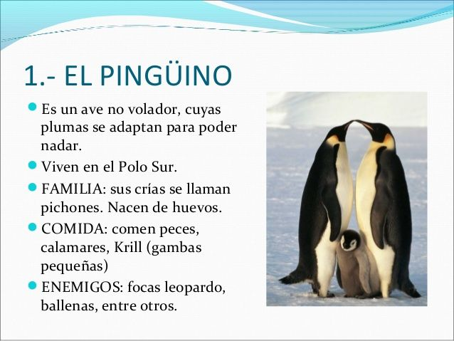 El Polo Caracteristicas Y Animales Animal Classification Animal Adaptations Penguins