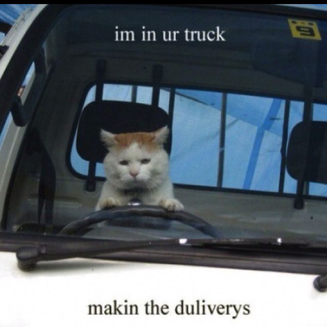 Postman Pat!! (With images) Funny cat photos, Cat