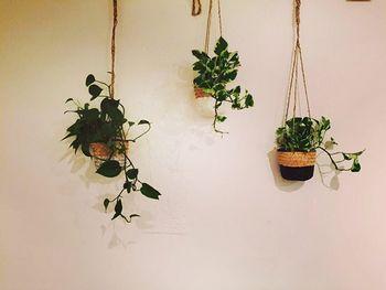 ハンギングプランターとは、名前の通り、「吊るした」プランター。 鉢やバスケットを、ロープなどで吊るすことで、スペースを有効活用できるんです。