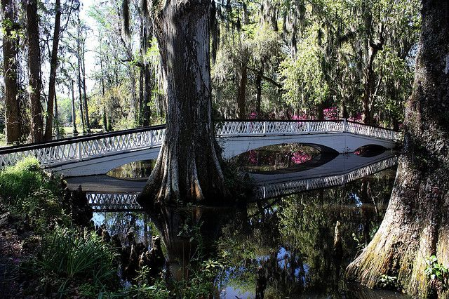 Charleston, SC: Touring Magnolia Plantation and Gardens with friends.