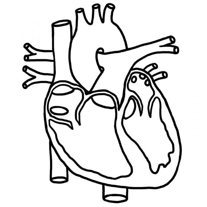 Human Heart Coloring Pictures For Kids Health Pictures Of Anatomy