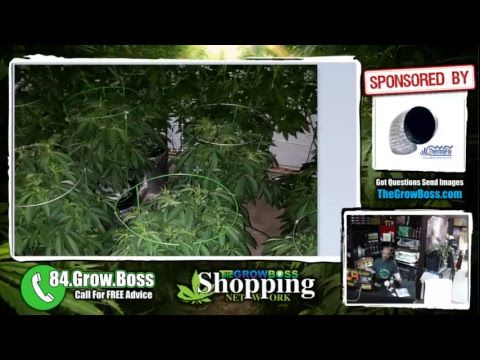 Grow boss shopping network e17 sick deals on indoor garden grow boss shopping network e17 sick deals on indoor garden cannabis equipment and caller questions how to grow pot pinterest cannabis workwithnaturefo