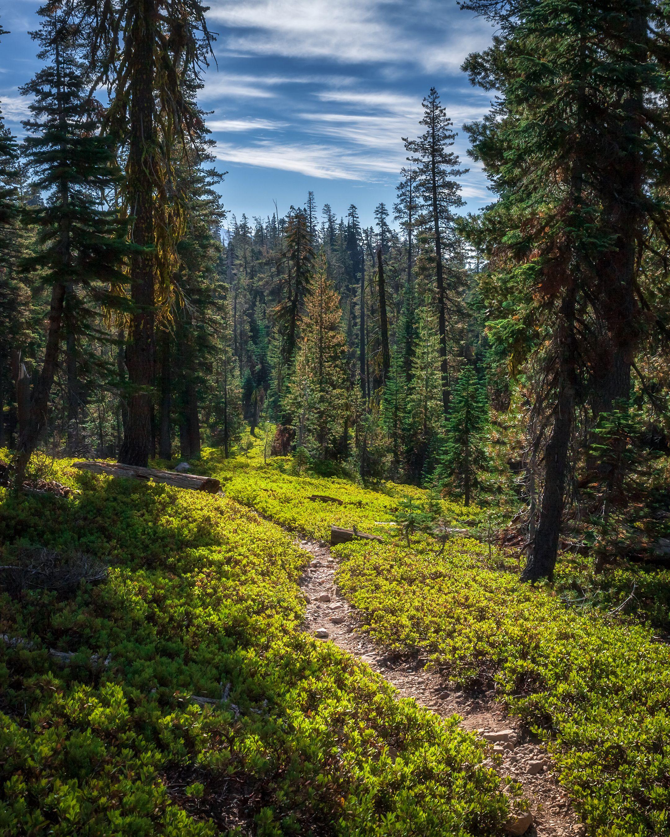 Lush Sub Alpine Forest In Lassen Volcanic Np 2160x2700 Mountain Landscape Photography Forest Landscape Landscape Photography