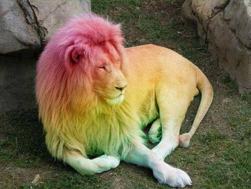 Christine Buttigieg S Photos Christine Buttigieg Facebook White Lion Black Lion Animals