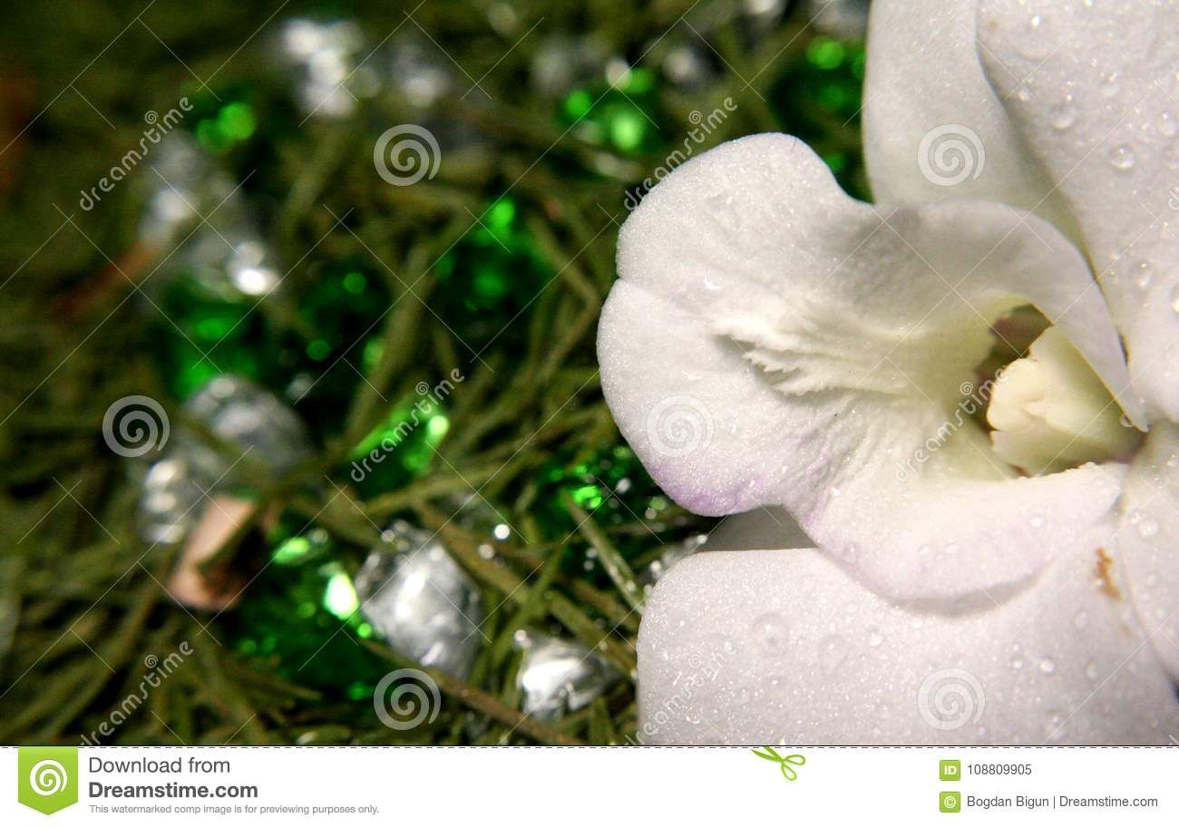 White orchid and precious heart photo about diamonds arrow