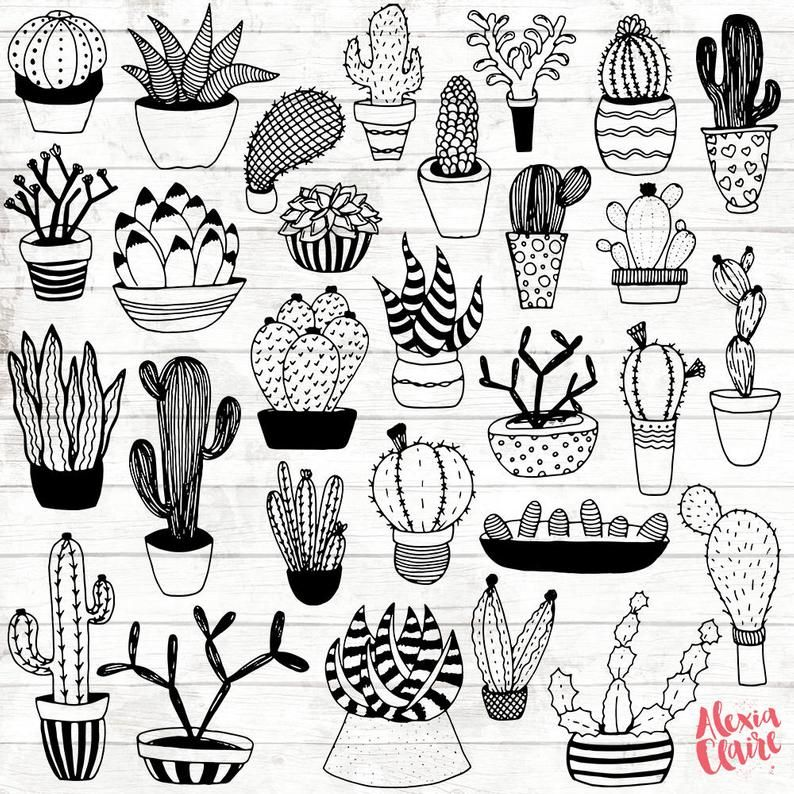 Succulent Clipart Hand Drawn Cactus Clipart Potted Cactus Etsy In 2021 How To Draw Hands Cactus Clipart Cactus Illustration