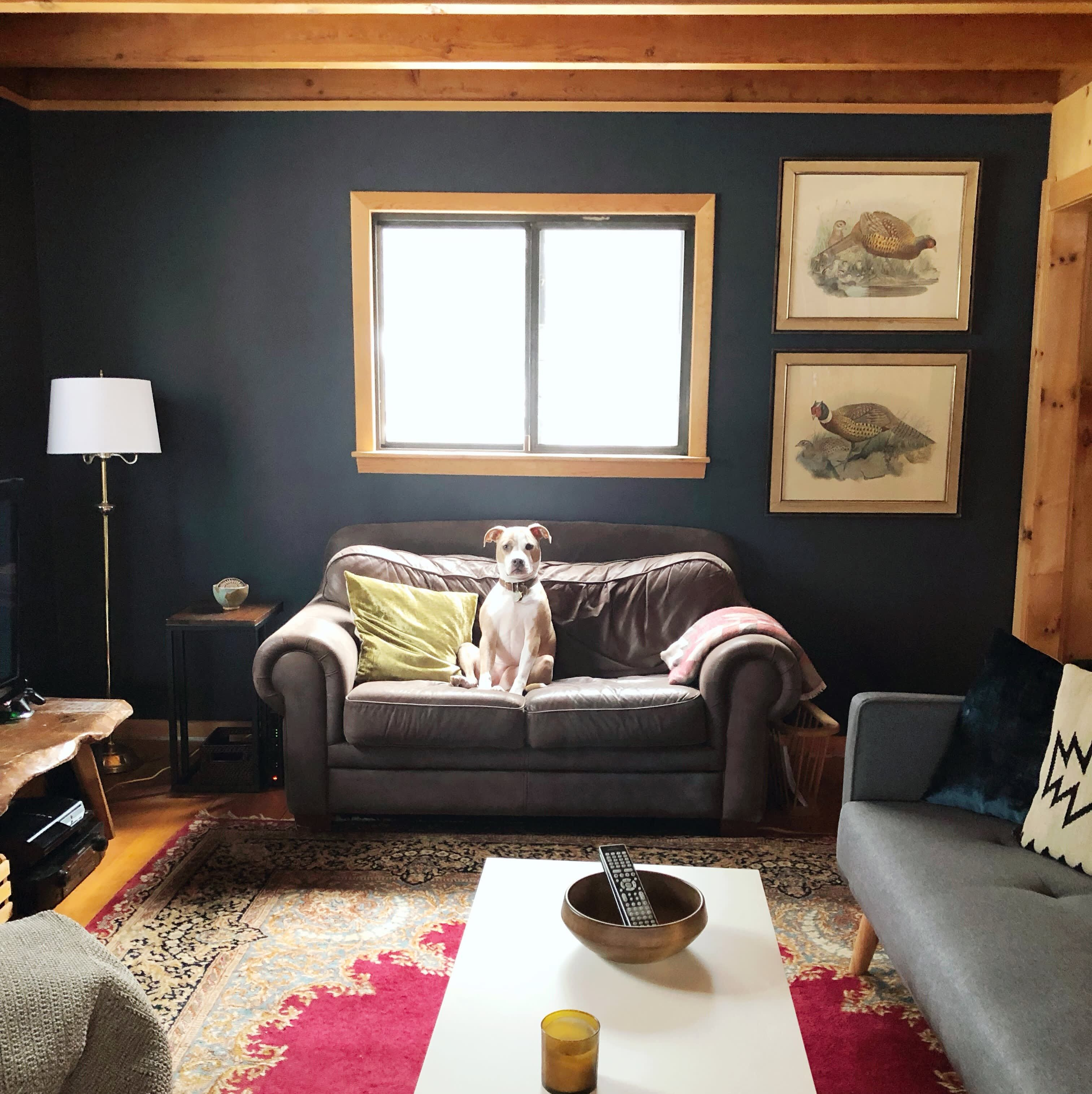 A Large Colorado Cabin Cultivates Cozy With Dark Paint Colors Dark Paint Colors Small Cabin Interiors Living Room Paint