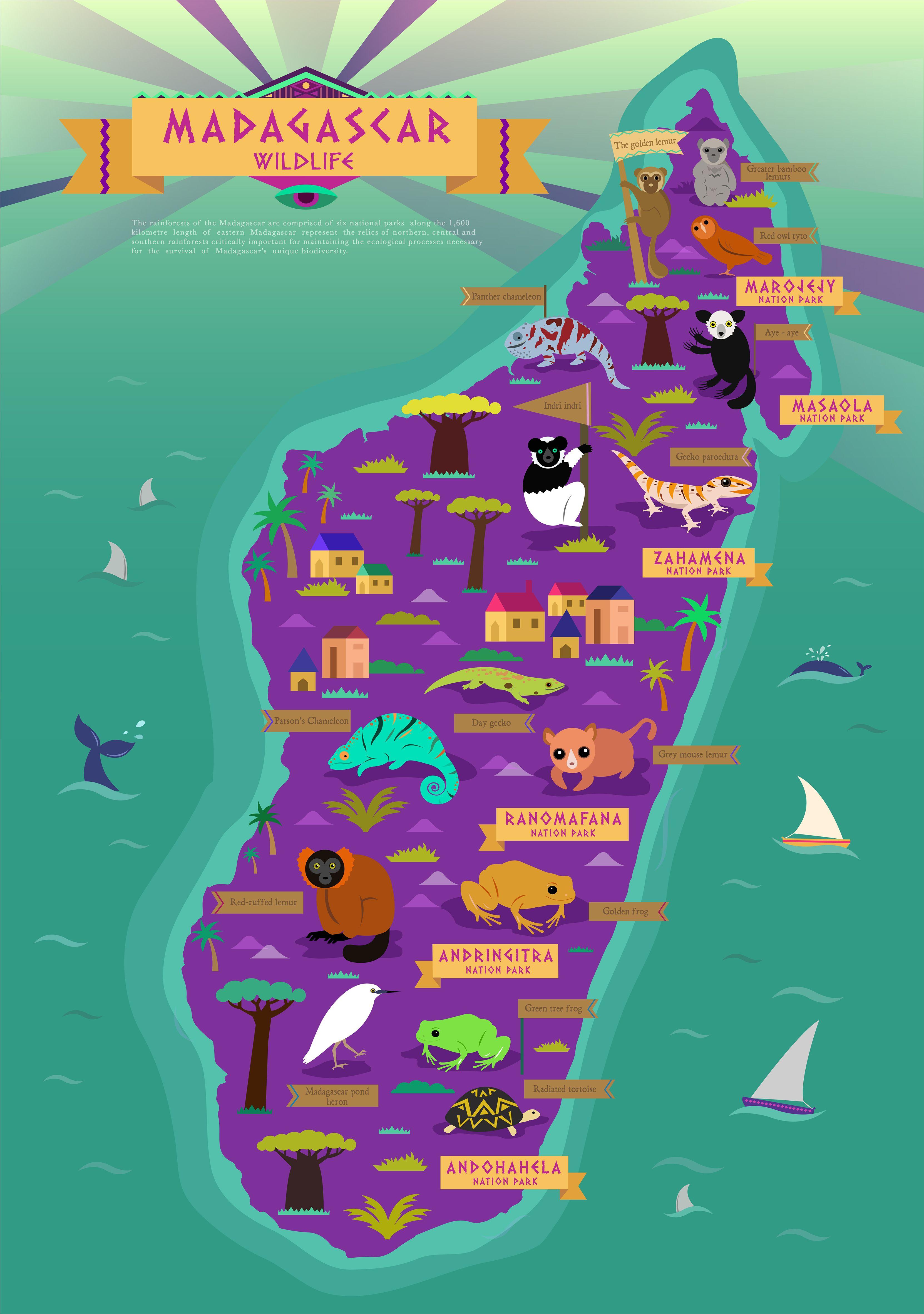 Madagascar wildlife map - artist unknown | Geography, Maps \u0026 The ...