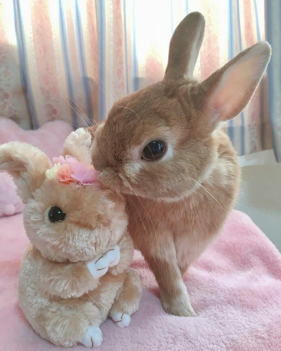 Cute dp in 2020 Cute baby animals, Cute animals, Cute