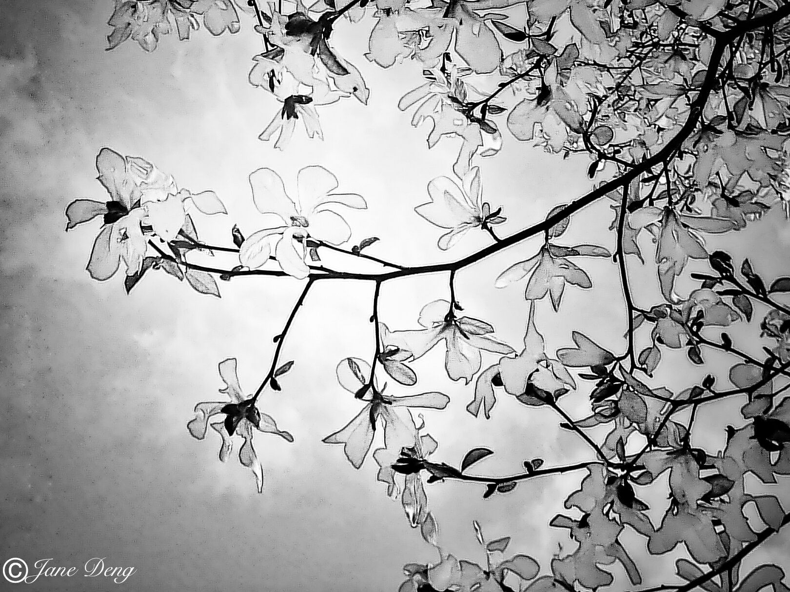 spring flowers~black and white -