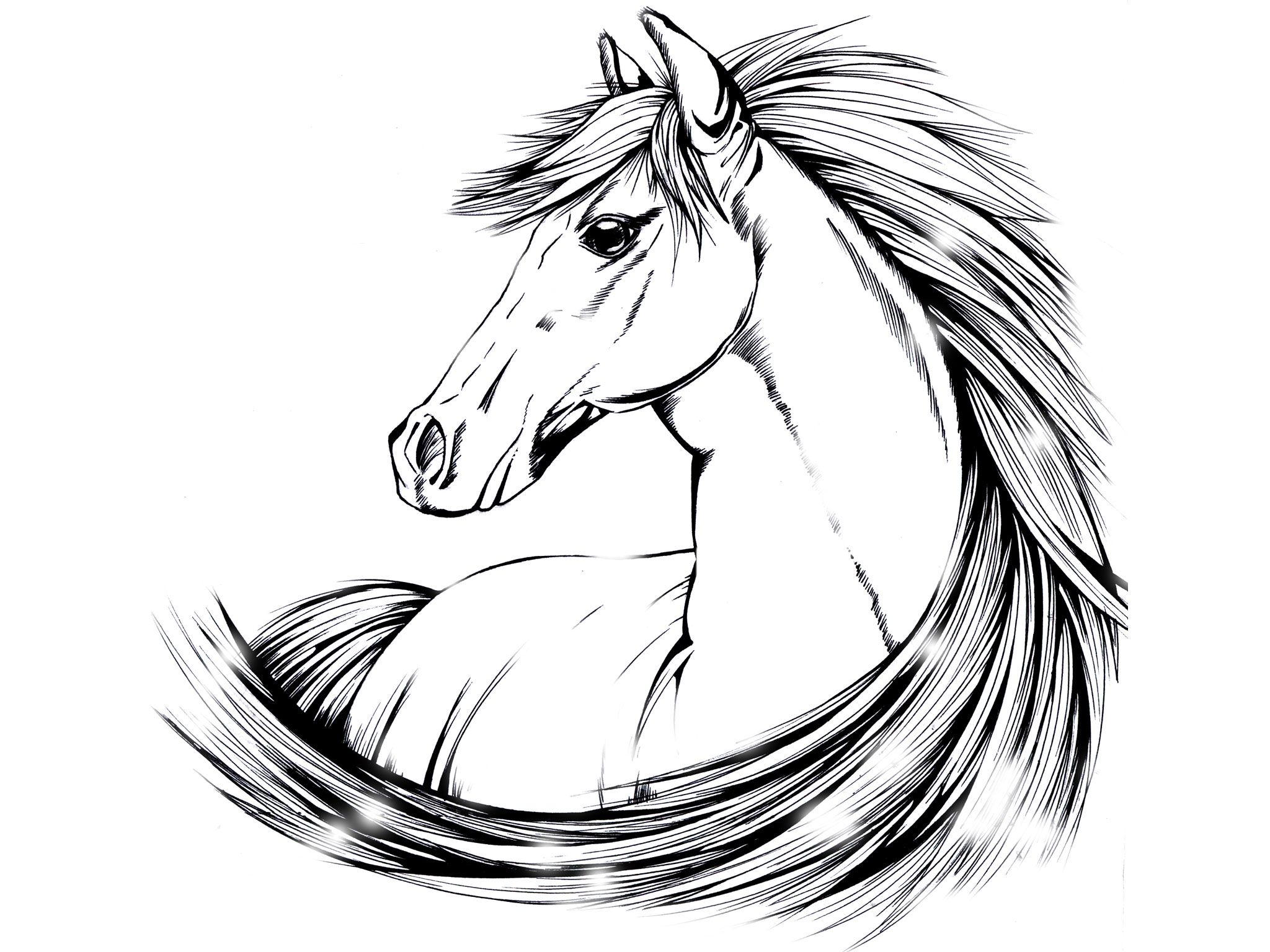 Horse Line Drawing Tattoo : Indian horse tattoo designs beautiful drawing