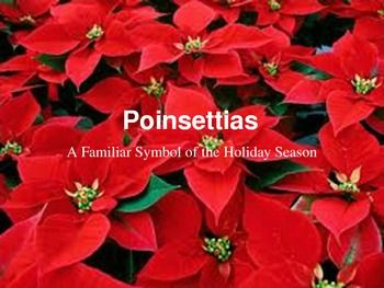 Poinsettias Christmas Symbol Powerpoint Poinsettia Plant Poinsettia Christmas Flowers