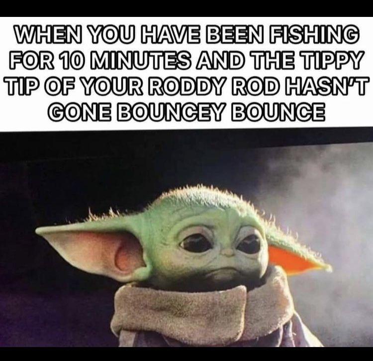 Pin By Robbin Carter On Funny In 2020 Yoda Meme Yoda Funny Funny Photos