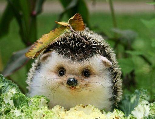 Maxime Grandjean On Twitter Cute Animals Animals Beautiful Animals