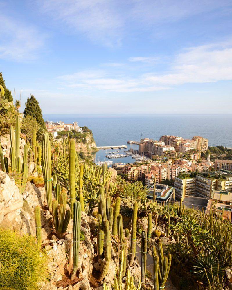 Rocher Le Jardin Exotique De Monaco A Cliff Side Cactus Garden