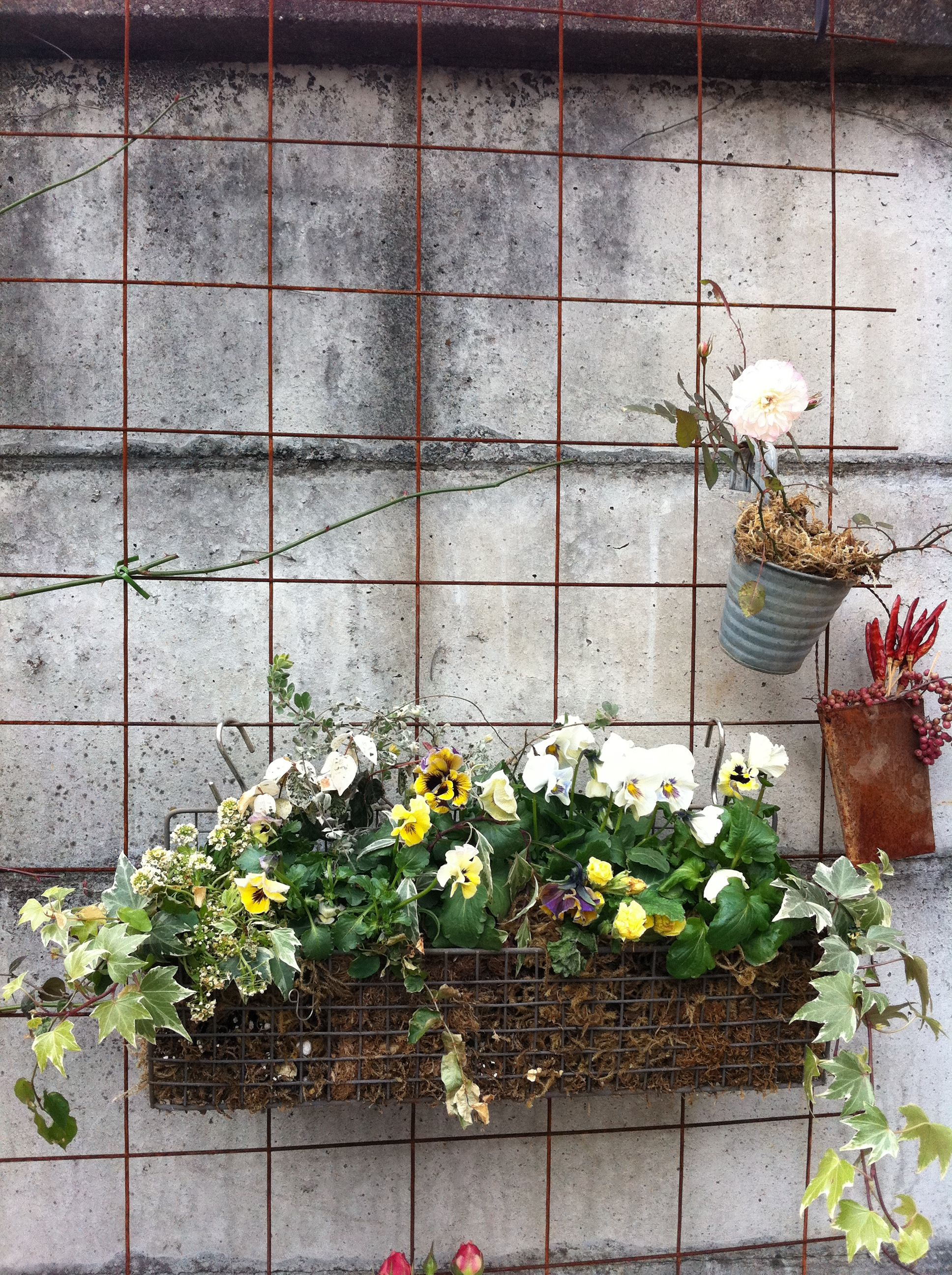 Window box ideas without flowers  hanging flower basket  window boxes u hanging baskets  pinterest