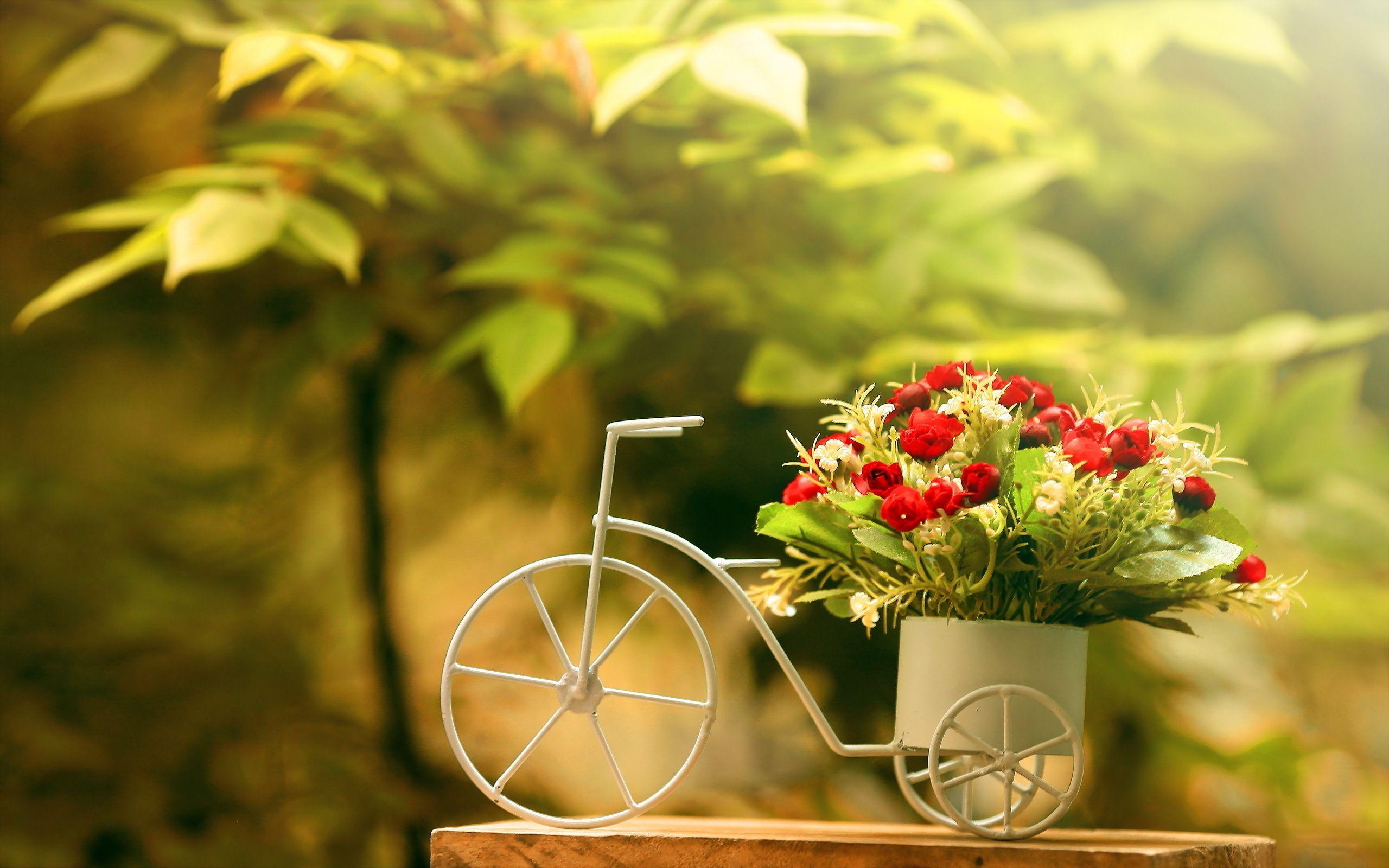 flowera wallpers Hľadať Googlom Kvety Pinterest Flower
