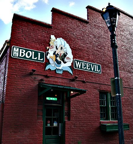 The Boll Weevil In Downtown Augusta Ga
