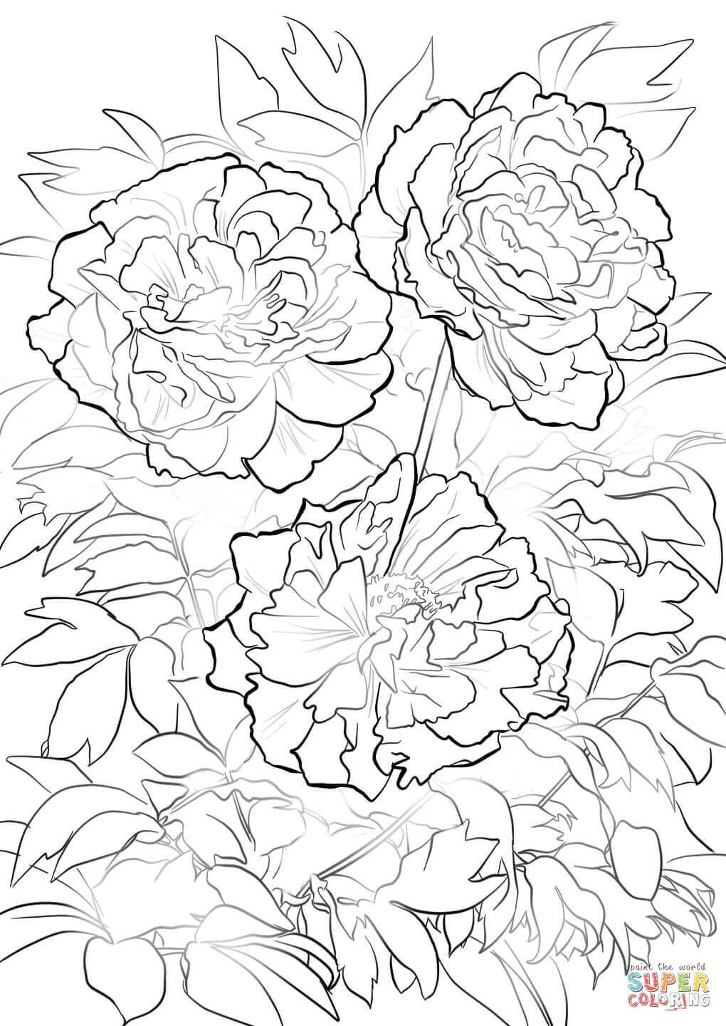 Moutan Or Tree Peony Coloring Page Free Printable Coloring Pages